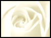 White Rose For Eternal Love! - Floral Wishes ecards - Flowers Greeting Cards